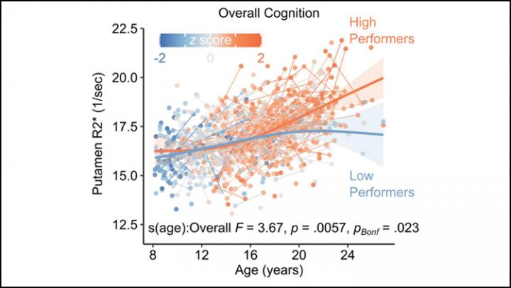 The Brain May Need Iron for Healthy Cognitive Development