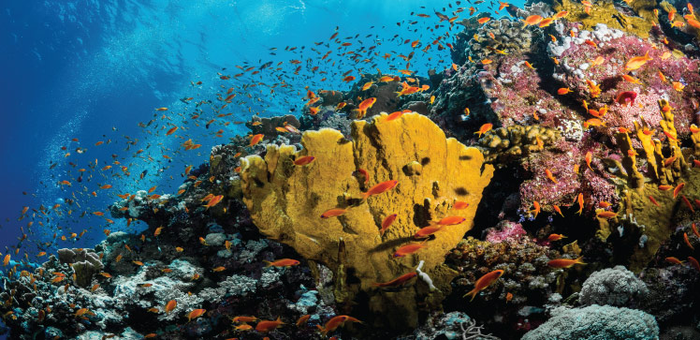 Quantifying future impacts on coral reefs