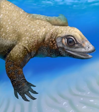 Juvenile Placodont