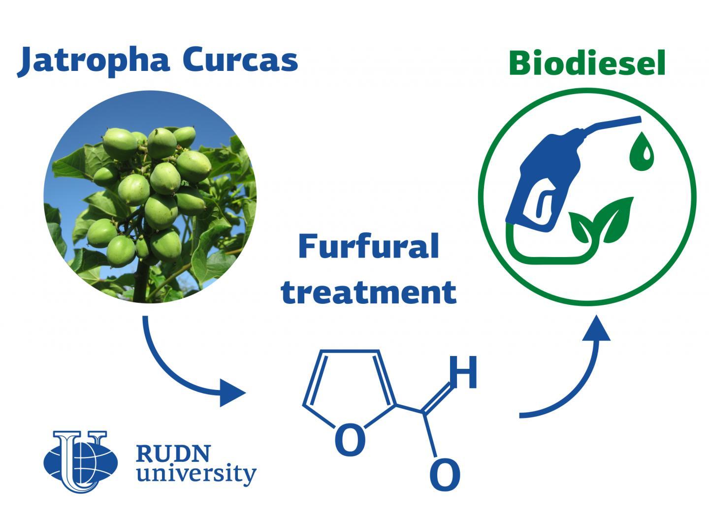 RUDN University Chemists Synthesize Biodiesel from Jatropha ?urcas Plant