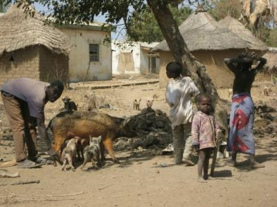 A Village in Northern Cameroon