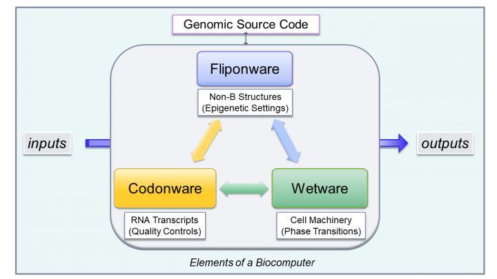 Cellular Bioware