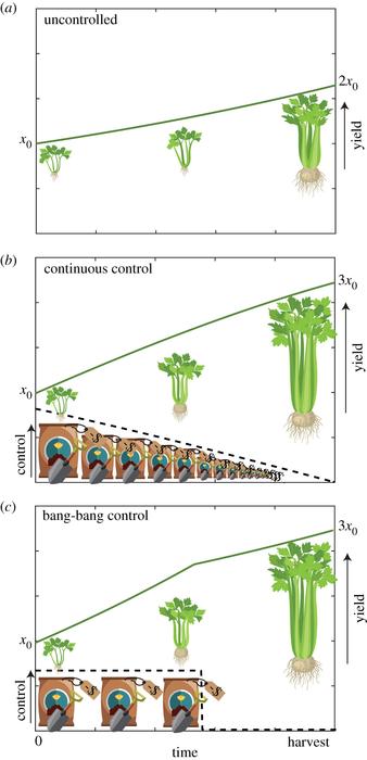 Optimal control strategies for crops
