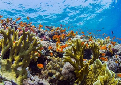 Researchers Find Microbes Key to Reef Survival