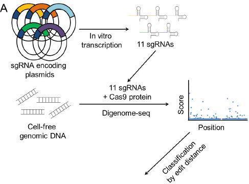 Schematic Overview of Multiplex Digenome-Seq