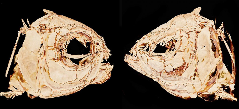 Cavefish (2 of 2)