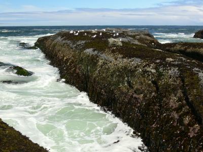 Mussel Shoreline