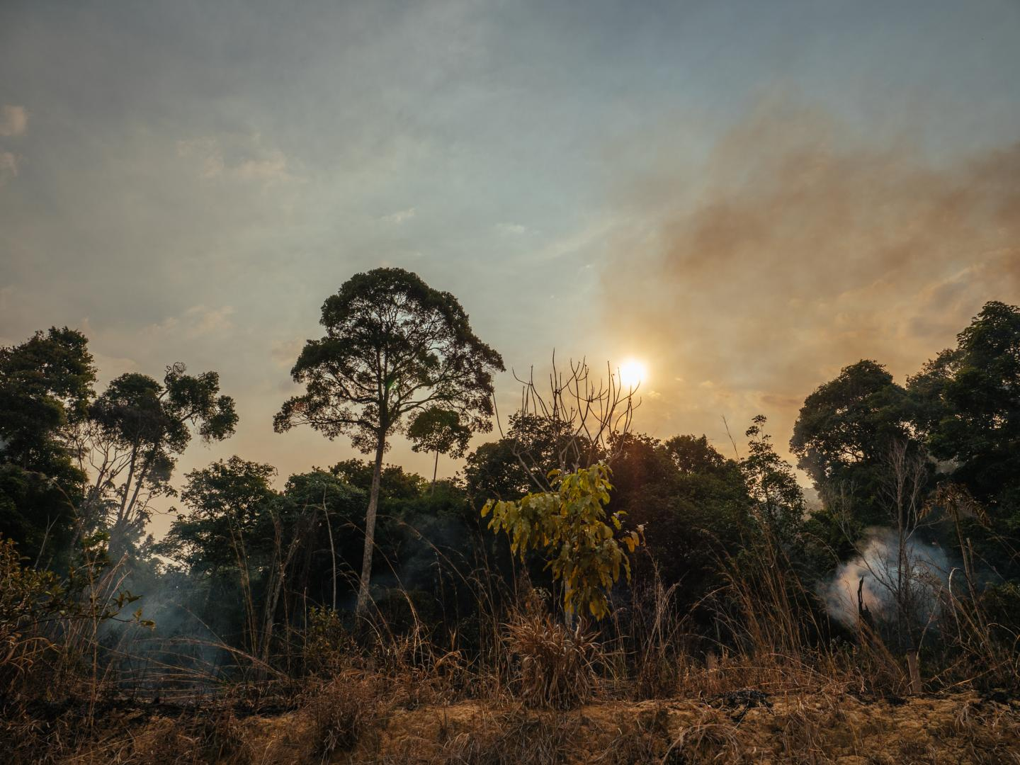 Burning Central Amazonian Forest