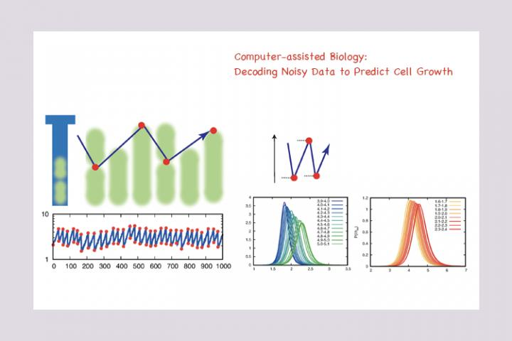 Computer-assisted Biology: Decoding Noisy Data to Predict Cell Growth