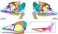 Digital reconstruction of the new Mesozoic bird skull with expanded detail of the dinosaur-like palatal bones