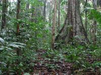 Tropical rainforest in Peru