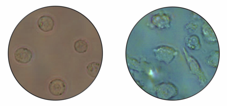 Mcroscope Image