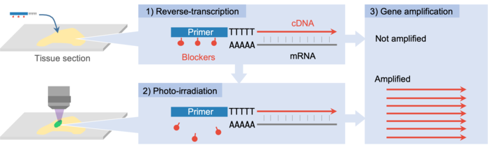 A principle of PIC technology to detect gene expression from photo-irradiated areas