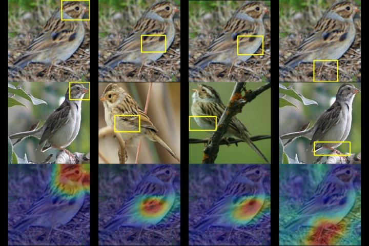 A Clay Colored Sparrow as Seen through the 'eyes' of An Algorithm
