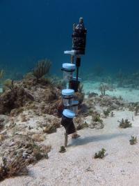 Cocolaba Reef