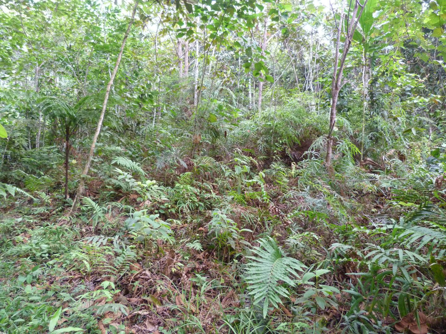 Secondary Forest