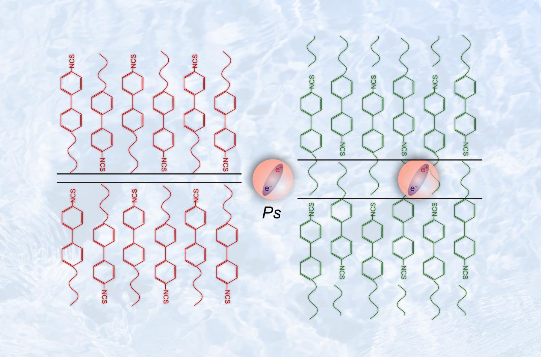 Positronium  in Liquid Crystals