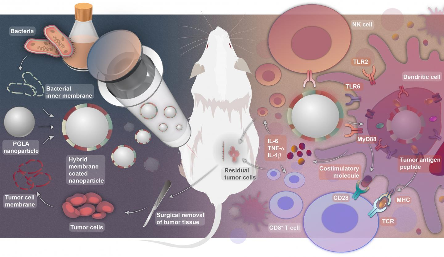 How to make the personalized antitumor vaccine and how it works