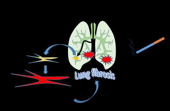 Effect of Vaping on Lung Fibrosis