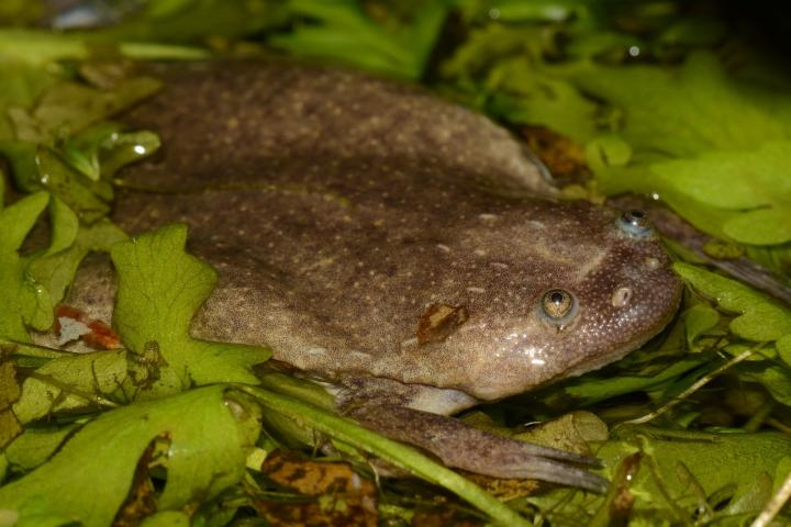 Researchers Discover Six New African Frog Species