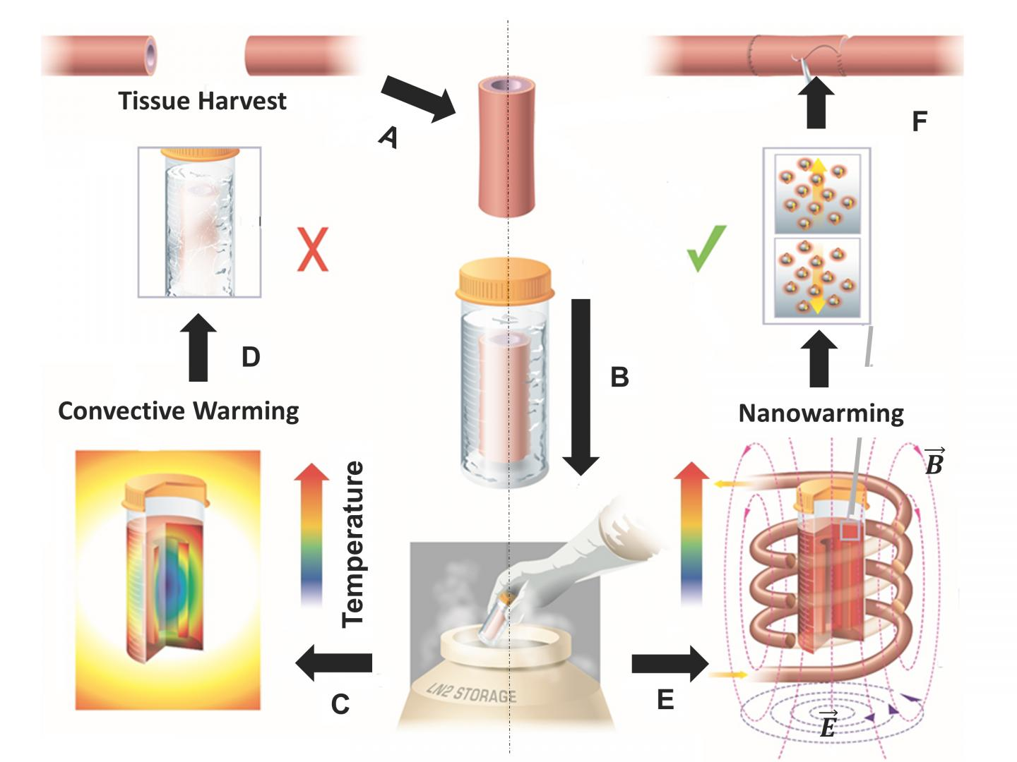 Warming Up to Cryopreservation
