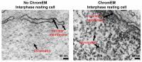 Chromatin with and without ChromEM Dye