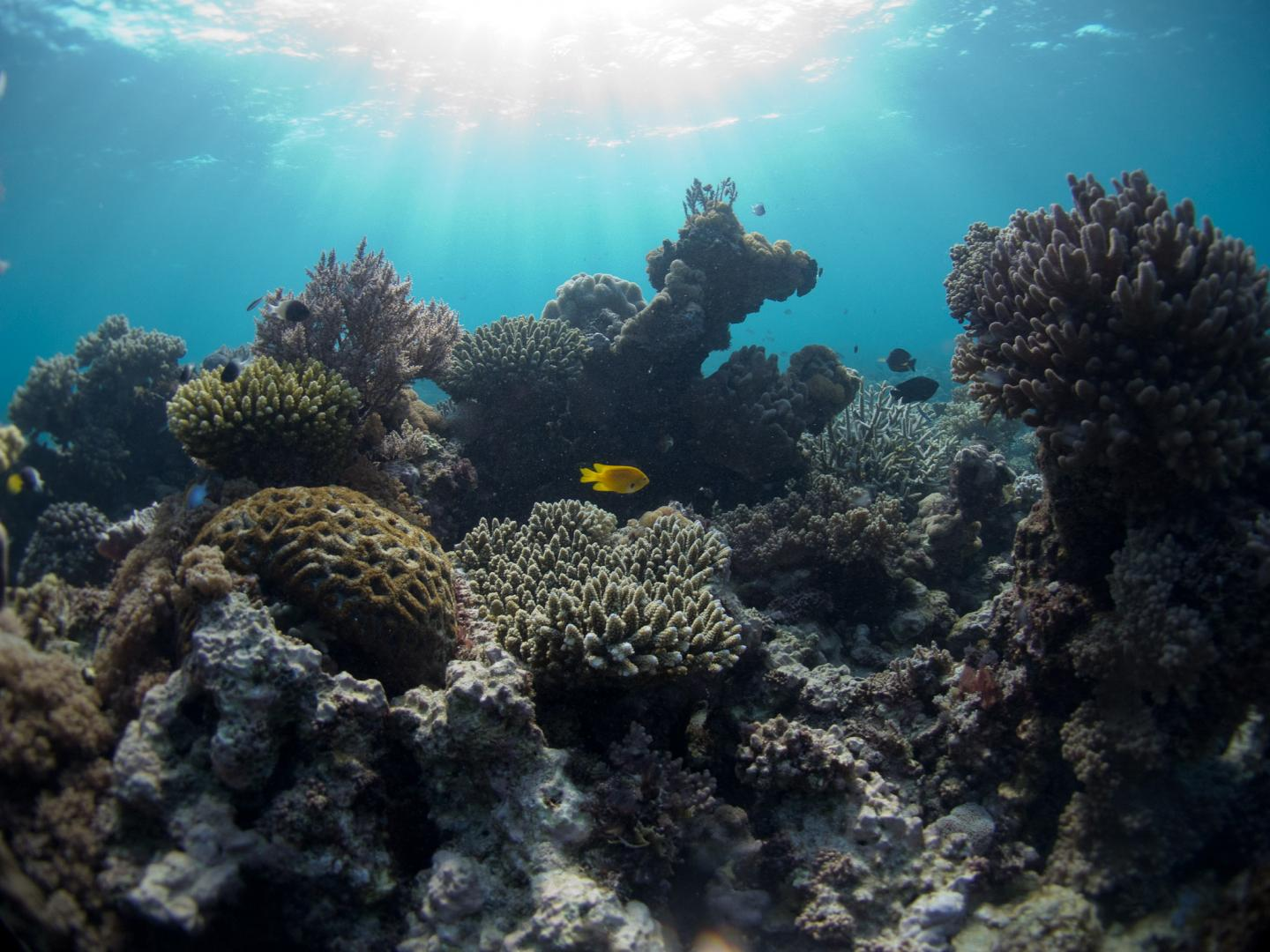 Coral Reef in Mozambique Channel