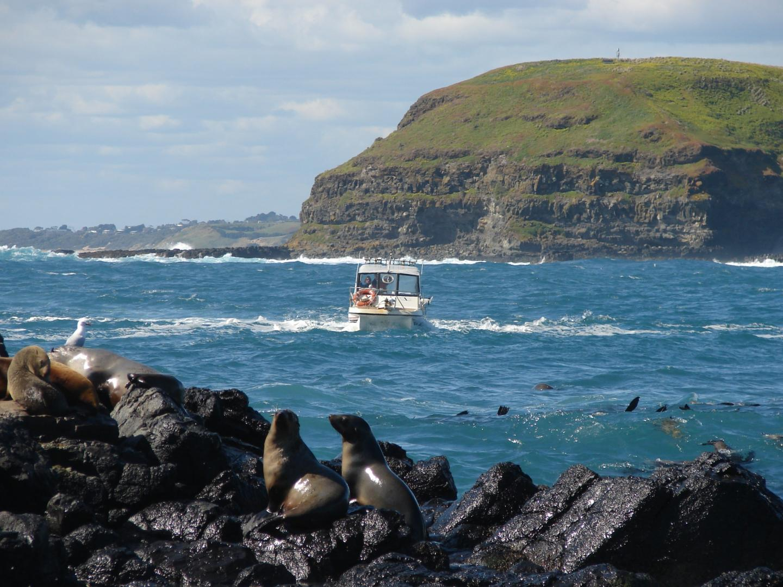 The Australian Fur Seal Colony