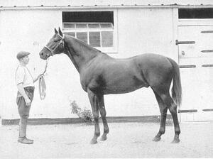 Black and White Photo of Dark Horse with Man