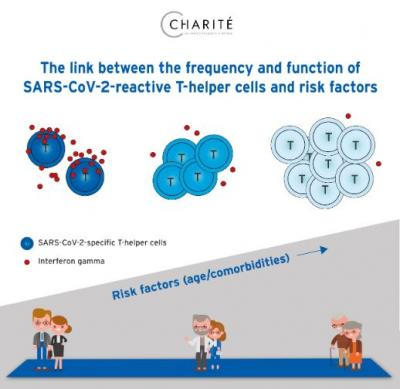 The Link between the Frequency and Function of SARS-CoV-2-Reactive T-Helper Cells and Risk Factors