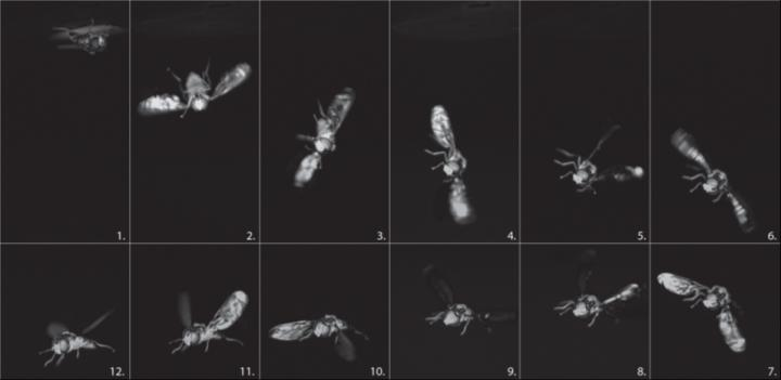 How Flies Flip around on Take-Off from An Upside- down Position