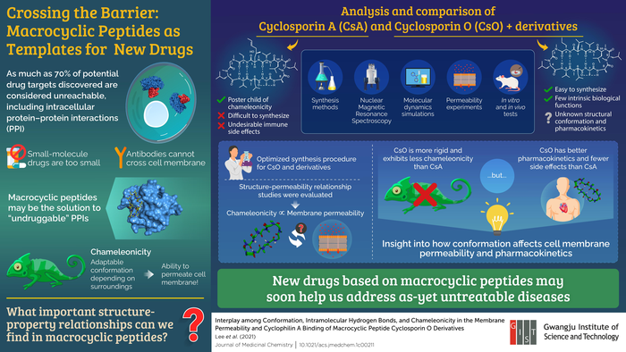 Macrocyclic Peptides as New Drug Templates