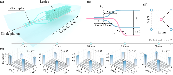 The 1×4 coupler and the measured single-photon distribution probability of corner states