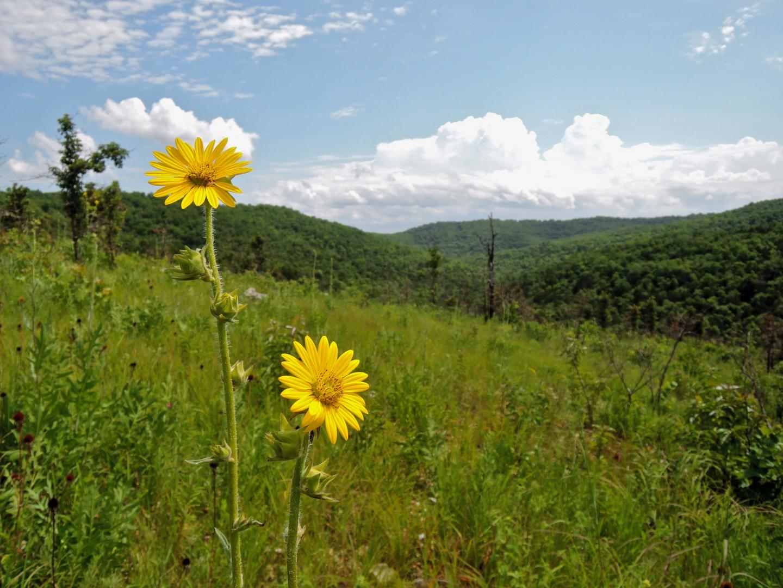 Ozark Grassland, Managed with Prescribed Fire