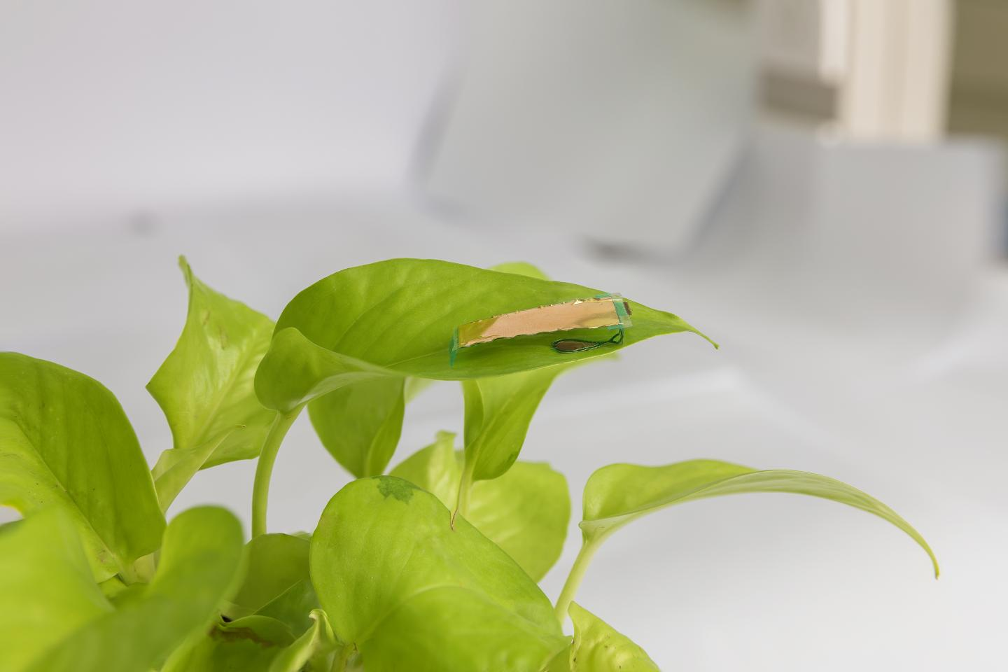 Insect-sized robot on a leaf