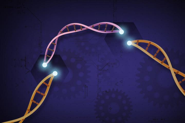 CRISPR Illustration
