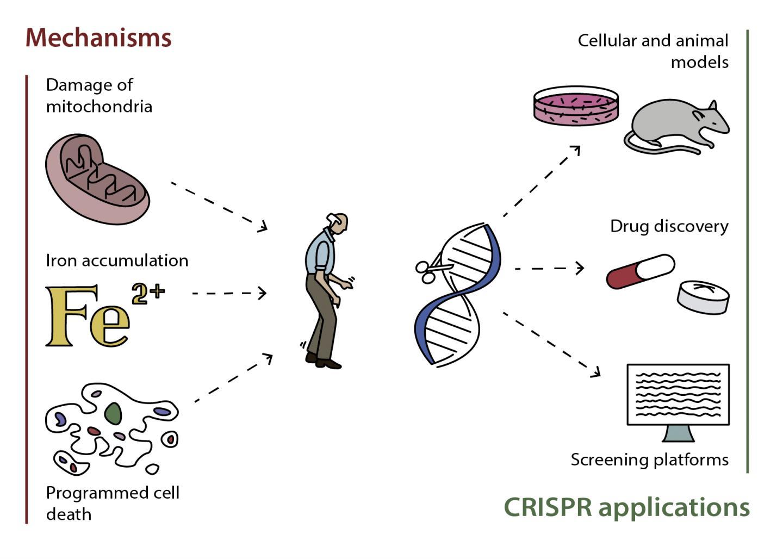 Mechanisms of Parkinson's Disease and CRISPR/Cas9 Applications