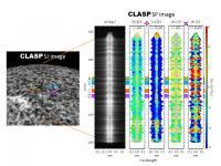 Figure 1: CLASP Observation