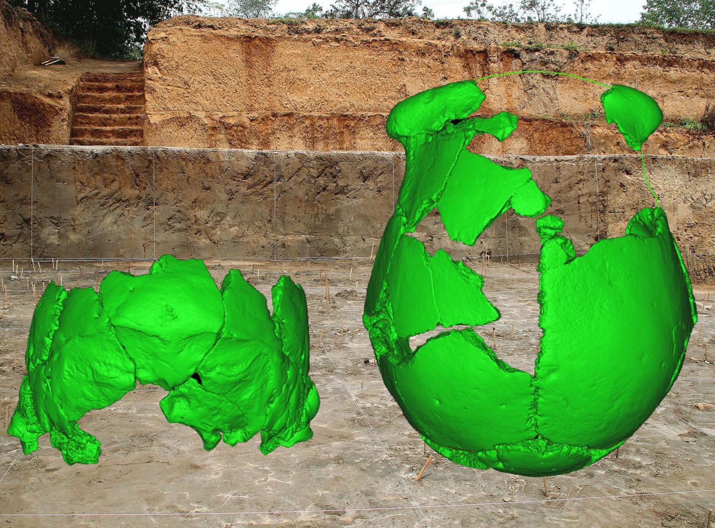 Skulls Inform Biology of Predecessors of Modern Humans in Eastern Eurasia