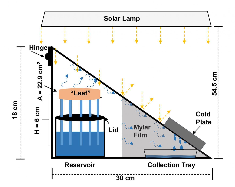 Synthetic Tree Enhances Solar Steam Generation for Harvesting Drinking