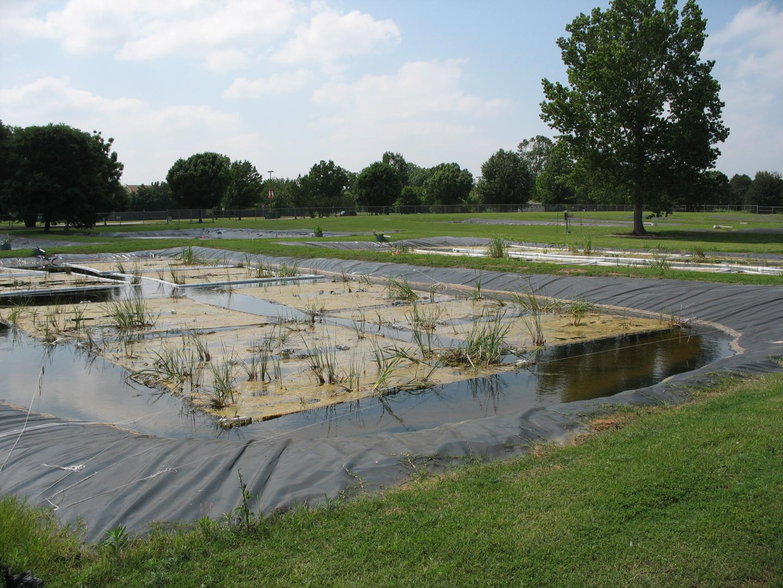 Installed Floating Wetland