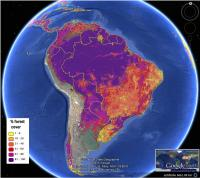 FAO-Calibrated Forest Map