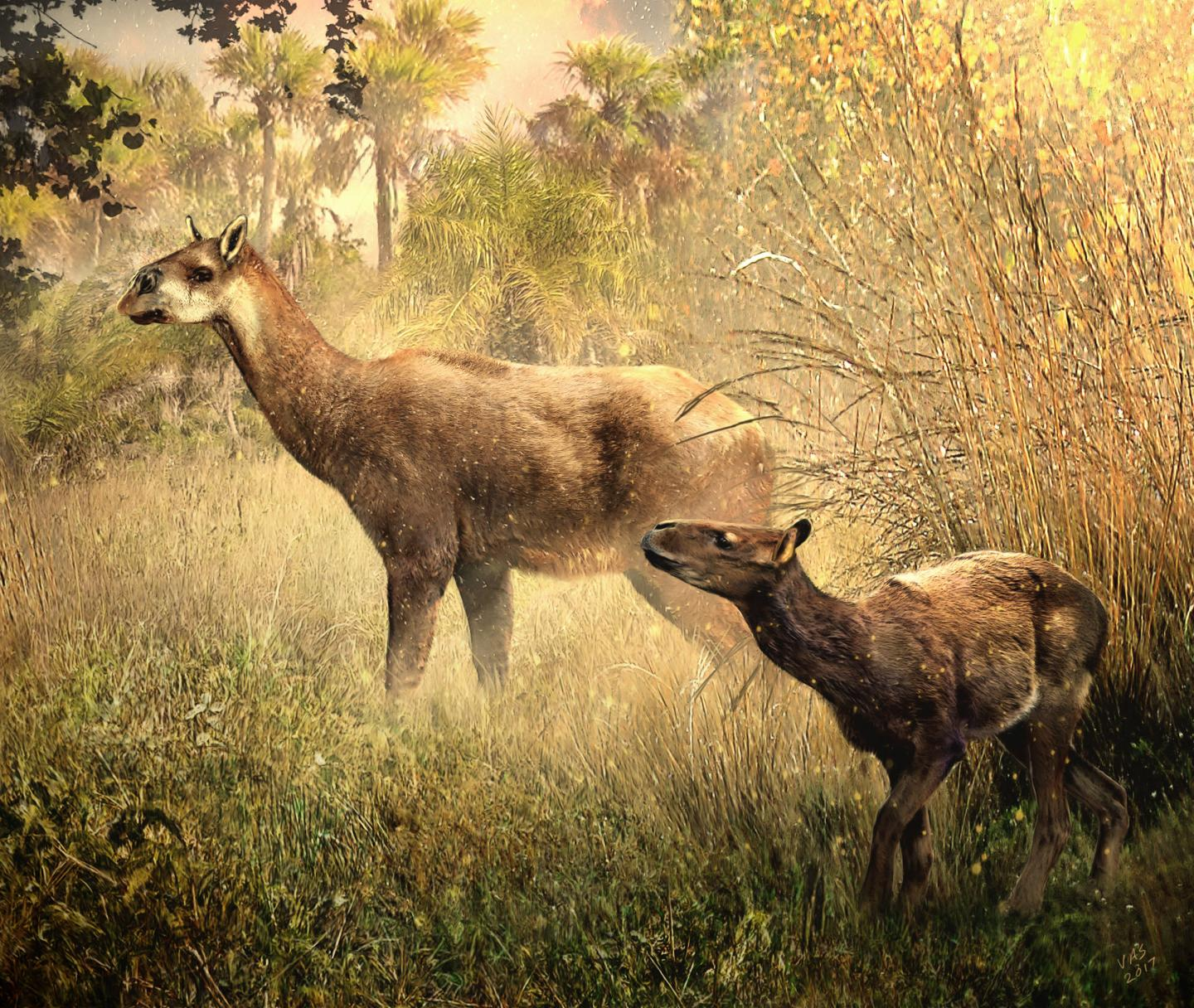 Litopterns: Two New Species of Hoofed Mammals in Bolivia