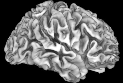 Image Depicting an Adolescent Brain