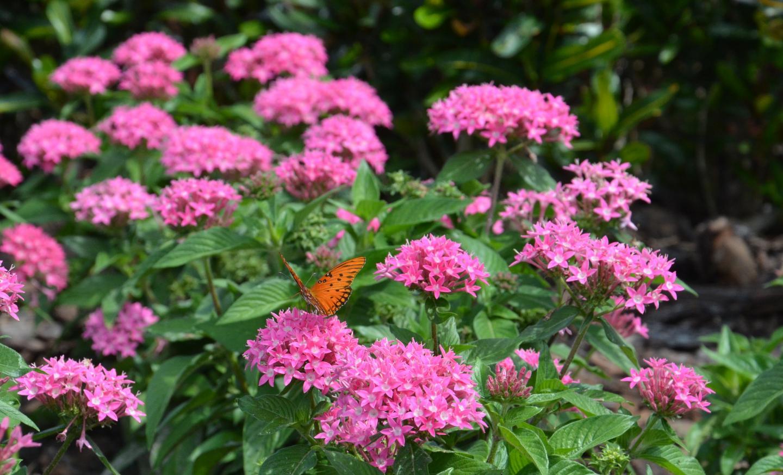 Biodiversity Reduces Human, Wildlife Diseases and Crop Pests