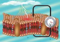 pyroelectric soft membrane