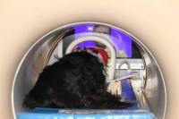 Dog in fMRI During Research