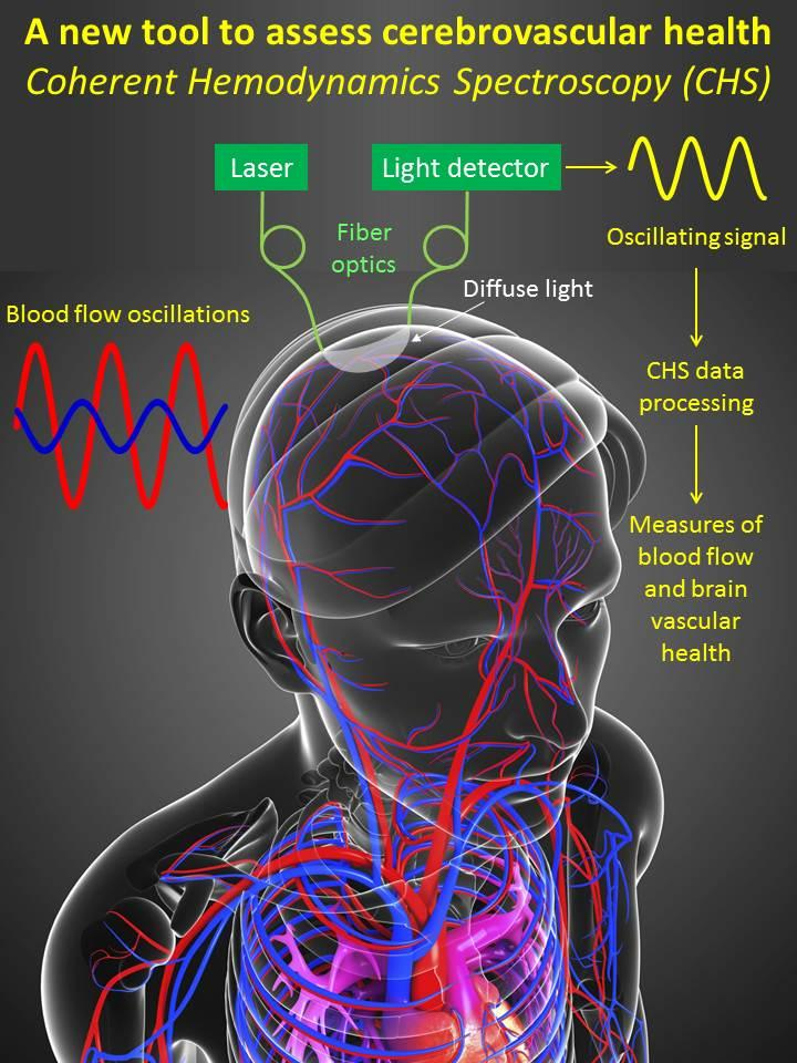 New Tool to Assess Cerebrovascular Health