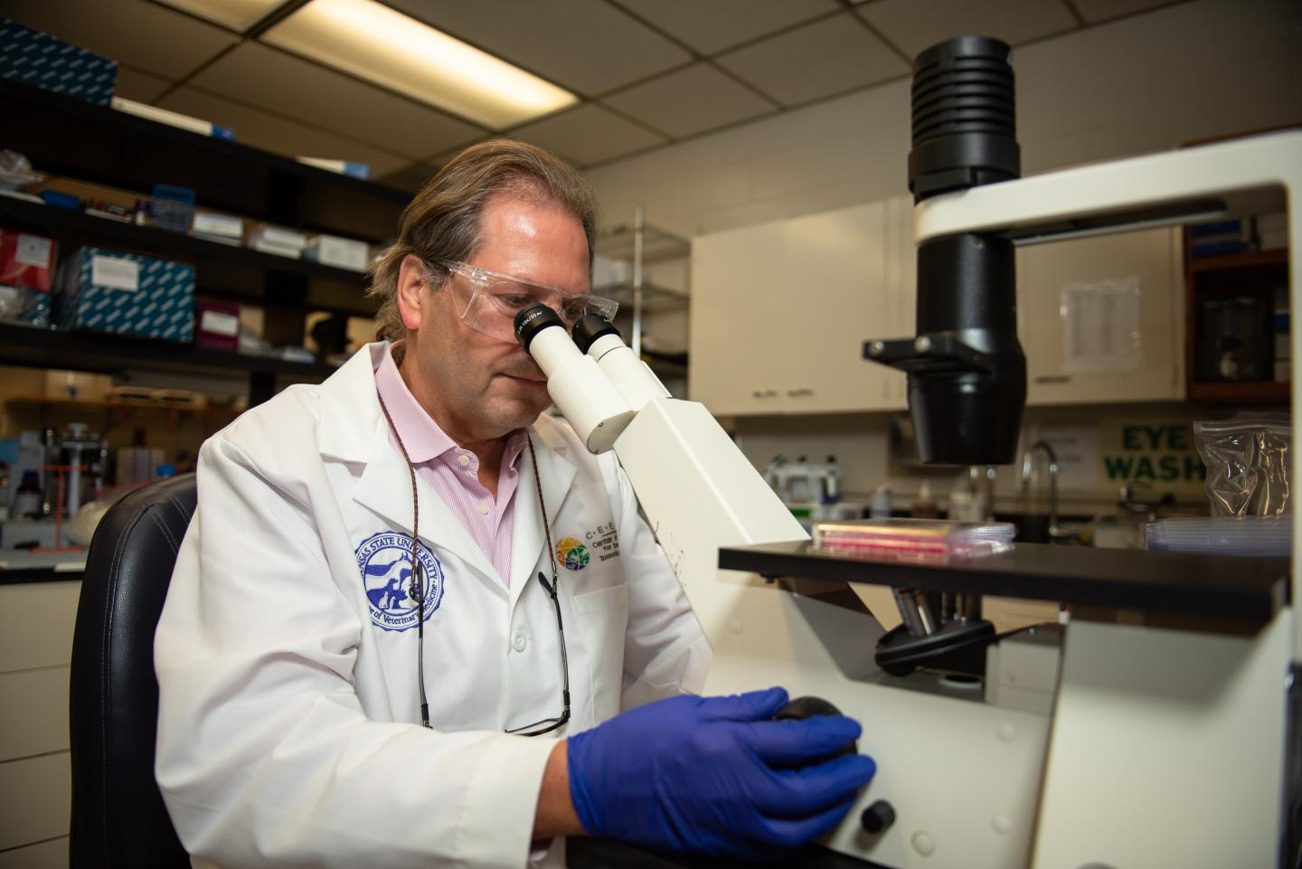 Two K-State studies focus on SARS-CoV-2 transmission in domestic cats, pigs -- photo