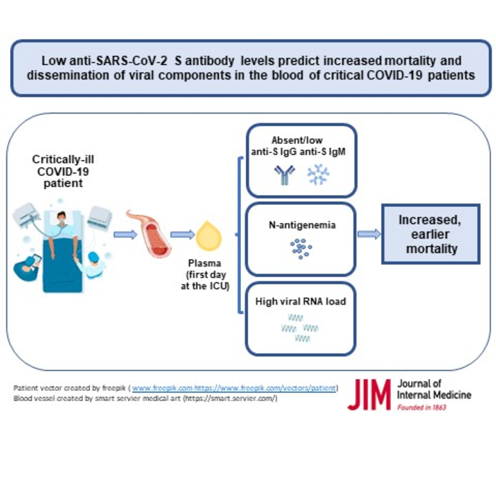 Antibody response, COVID-19 and risk of death